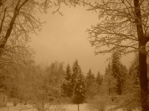 A Sepia Day