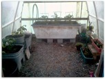 The greenhouse!