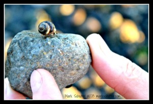 A Snail's World