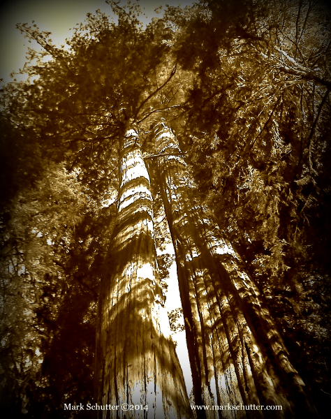Redwood National Forest, California