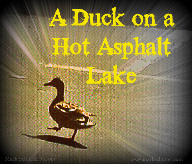 A Duck_Hot Asphalt Lake