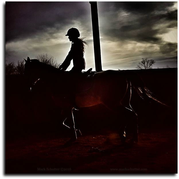 Learning to Fly | Horse| Equine | Dreams | Arabian | MarkSchutter.com